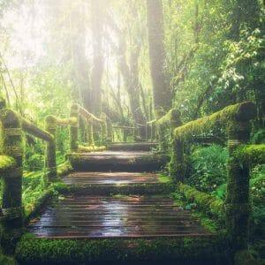 Vauraus ja onnellisuus -meditaatio